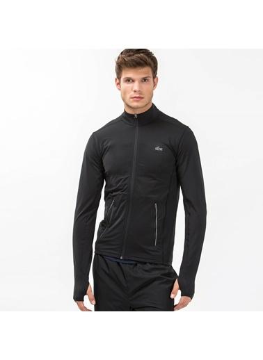 Sweatshirt-Lacoste